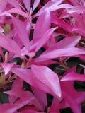 Flores cor-de-rosa brilhantes Foto de Stock Royalty Free