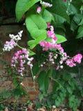 Flores cor-de-rosa brilhantes Fotos de Stock Royalty Free