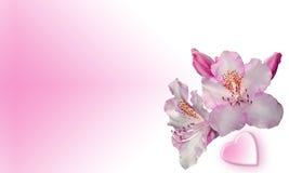 Flores cor-de-rosa com coração Fotografia de Stock Royalty Free