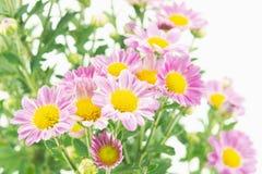 Flores cor-de-rosa com grupo verde das folhas no branco fotografia de stock royalty free