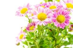 Flores cor-de-rosa com grupo verde das folhas no branco imagens de stock royalty free