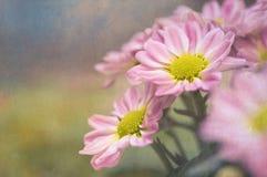 Flores cor-de-rosa com uma textura do vintage Fotografia de Stock Royalty Free