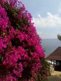 Flores cor-de-rosa da cor Fotos de Stock Royalty Free