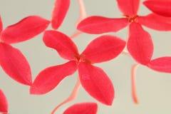 Flores cor-de-rosa da agulha fotografia de stock