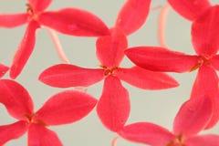 Flores cor-de-rosa da agulha imagem de stock royalty free