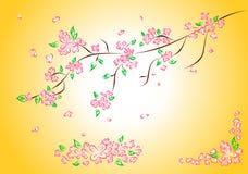 Flores cor-de-rosa da mola Imagens de Stock