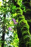 Flores cor-de-rosa da orquídea imagem de stock