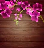 Flores cor-de-rosa da orquídea no fundo de madeira ilustração do vetor