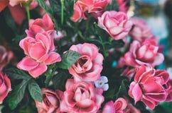 Flores cor-de-rosa das rosas Imagens de Stock Royalty Free