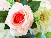 Flores cor-de-rosa das rosas Fundo do borrão Imagens de Stock Royalty Free