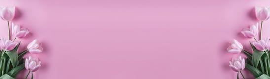 Flores cor-de-rosa das tulipas no fundo cor-de-rosa Mola de espera Cartão de easter feliz Configuração lisa imagens de stock