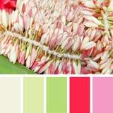 Flores cor-de-rosa de florescência amostras de folha da paleta de cores Foto de Stock Royalty Free