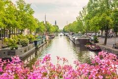 Flores cor-de-rosa de florescência em uma ponte do canal de Amsterdão imagem de stock