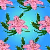 Flores cor-de-rosa do teste padrão Fotos de Stock