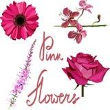 flores cor-de-rosa do vetor ajustadas Fotos de Stock
