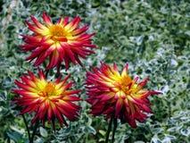 3 flores cor-de-rosa e amarelas com fundo verde do teste padrão Imagens de Stock