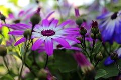 Flores cor-de-rosa e azuis fotografia de stock