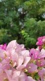 Flores cor-de-rosa e brancas no verde Imagem de Stock Royalty Free