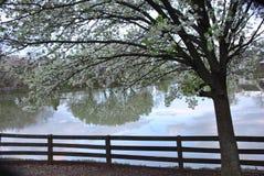 Flores cor-de-rosa e reflexões na água Foto de Stock Royalty Free