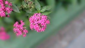 Flores cor-de-rosa em um fundo borrado Foto de Stock