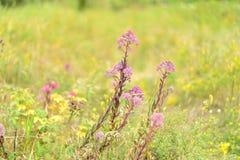Flores cor-de-rosa em um fundo da grama verde-amarela imagens de stock royalty free
