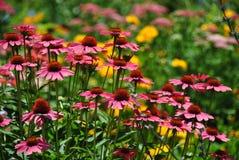 Flores cor-de-rosa em um jardim Foto de Stock