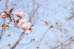 Flores cor-de-rosa em um ramo foto de stock royalty free