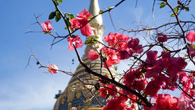 Flores cor-de-rosa em uma árvore com um Stupa atrás Imagem de Stock Royalty Free