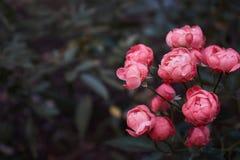 Flores cor-de-rosa em uma floresta fotos de stock royalty free