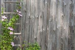 Flores cor-de-rosa em uma parede de madeira velha Fotos de Stock Royalty Free