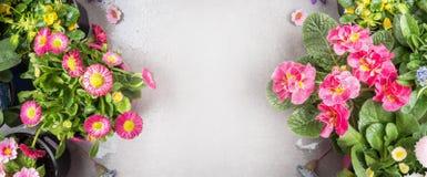 Flores cor-de-rosa em uns potenciômetros para a decoração do jardim no fundo de pedra, vista superior Fotos de Stock
