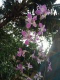 Flores cor-de-rosa eretas Fotografia de Stock Royalty Free