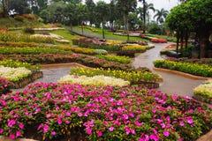 Flores cor-de-rosa escuras com uma gota da água em um jardim, em um fundo colorido do jardim imagem de stock royalty free