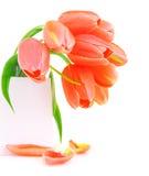 Flores cor-de-rosa frescas do tulip Imagens de Stock Royalty Free