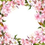 Flores cor-de-rosa - maçã, flor de cerejeira Frame floral watercolour Fotografia de Stock Royalty Free