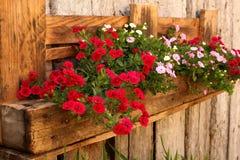 Flores cor-de-rosa na calha fixada na parede feito a mão Fotos de Stock Royalty Free