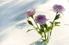 Flores cor-de-rosa na floresta do inverno Imagens de Stock