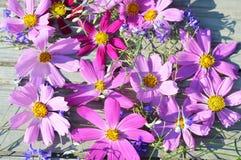 Flores cor-de-rosa nas placas do fundo Foto de Stock