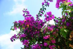 Flores cor-de-rosa no dky Foto de Stock
