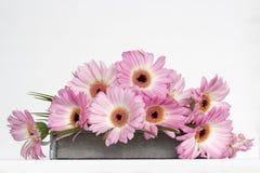 Flores cor-de-rosa no fundo branco Foto de Stock