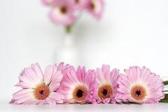 Flores cor-de-rosa no fundo branco Foto de Stock Royalty Free