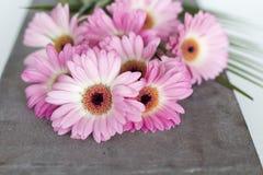 Flores cor-de-rosa no fundo branco Fotos de Stock