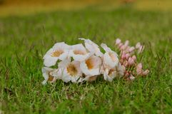 flores cor-de-rosa no jardim verde Fotografia de Stock