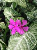 flores cor-de-rosa no meio do verde Fotografia de Stock Royalty Free