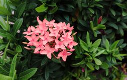 Flores cor-de-rosa no verão no meio das hortaliças Imagens de Stock