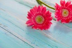 Flores cor-de-rosa no vintage de madeira no fundo azul da pintura, Foto de Stock Royalty Free