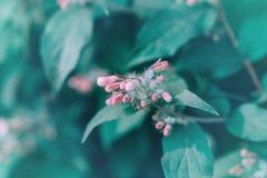 Flores cor-de-rosa pequenas coloridas bonitas com as folhas verdes no bokeh obscuro do fundo imagens de stock royalty free