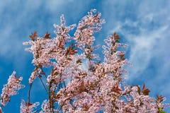 Flores cor-de-rosa pequenas em um céu azul imagens de stock