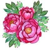 Flores cor-de-rosa pintados à mão da peônia da aquarela com folhas ilustração stock