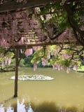 Flores cor-de-rosa que conectam sobre um toldo imagens de stock royalty free